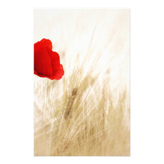 Red Poppy Flower in Field of Ripe Cereals Custom Stationery
