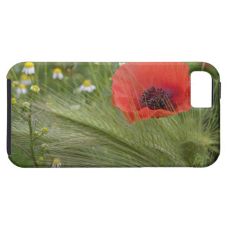 Red poppy flower, Tuscany, Italy iPhone 5 Covers