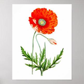 Red Poppy Flower Wall Decor Print #4