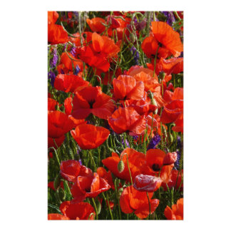 Red Poppy Flowers Stationery