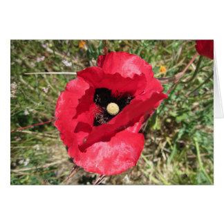 Red Poppy Friendship Card