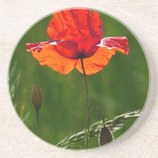 Red poppy in summer 02 beverage coasters