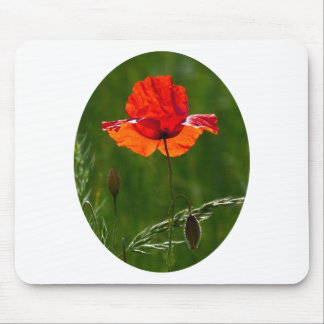 Red poppy in summer 02 mouse pad