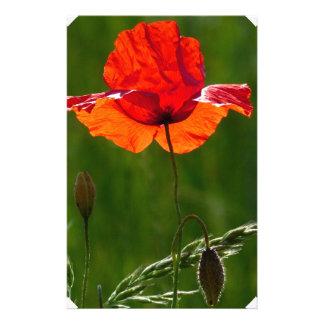 Red poppy in summer 02 stationery