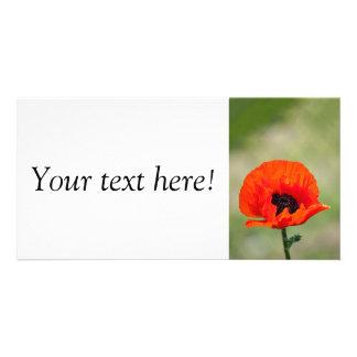 Red poppy photo card