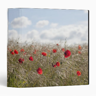 Red poppy, Picardy, Somme, Pont Remy Binder