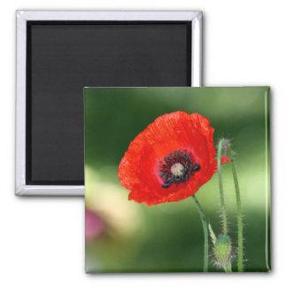 Red Poppyseed Flower Square Magnet