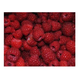 Red Raspberries Postcard