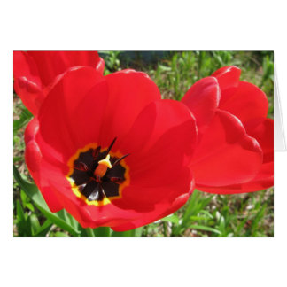 Red Red Red Tulips Card