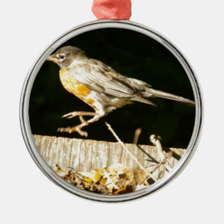 Red Robin Bobbin Silver-Colored Round Ornament