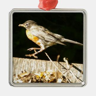 Red Robin Bobbin Silver-Colored Square Ornament