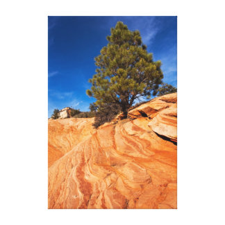 Red Rock Conifer Canvas Print