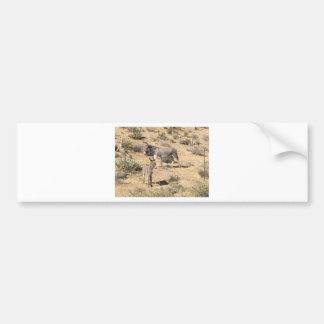 Red rock state park nv donkey bumper sticker