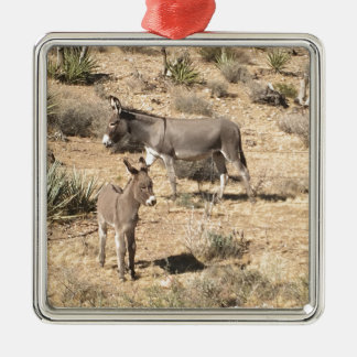Red rock state park nv donkey metal ornament