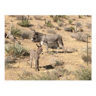 Red rock state park nv donkey postcard