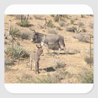 Red rock state park nv donkey square sticker