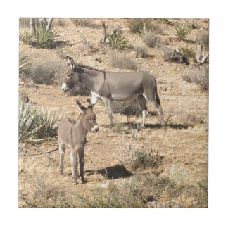Red rock state park nv donkey tile