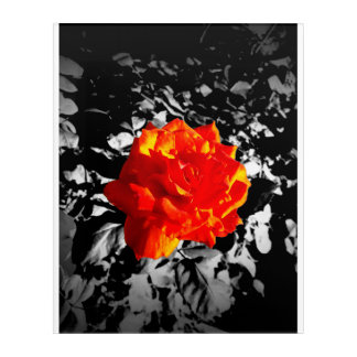 Red Rose Acrylic Wall Art