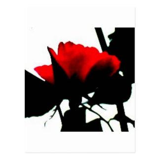 Red rose and black stem post card