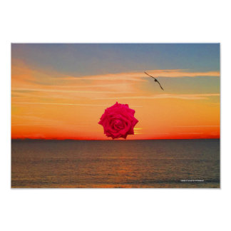 Red Rose at Sunrise Poster