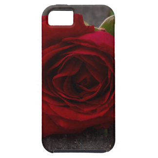 red rose background iPhone 5 cover