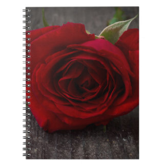 red rose background notebook