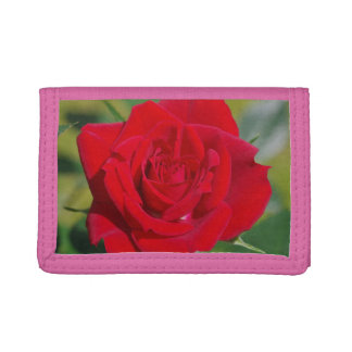 Red Rose Beauty Tri-fold Wallet