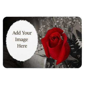 Red Rose Black and White Oval Frame Magnet