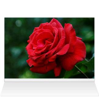 Red Rose Card