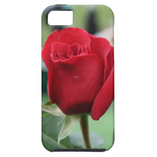 Red rose case for the iPhone 5