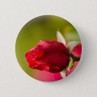 Red rose close up design 2 inch round button