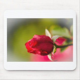 Red rose close up design mouse pad