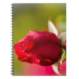 Red rose close up design note book