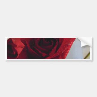 Red Rose Delight Bumper Sticker