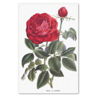 "Red Rose Floral 10"" X 15"" Tissue Paper"