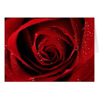 Red Rose Floral Flower Rose Petals Blossoms Dew Card
