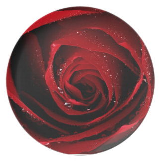 Red Rose Floral Flower Rose Petals Blossoms Dew Plate