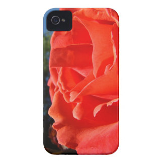 Red Rose Flower Blackberry phone cases Gifts Blackberry Bold Covers