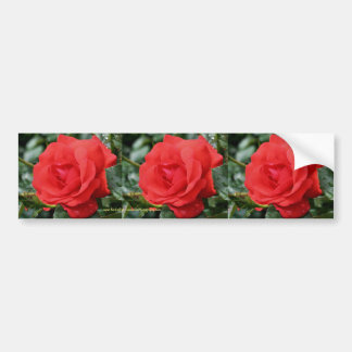 Red Rose Flower Bumper Sticker Car Art
