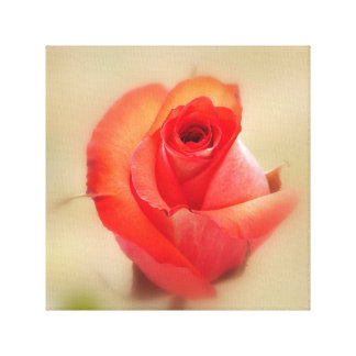 Red Rose Flower Nature Romantic Lovely Canvas