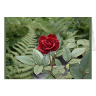 Red Rose Flower Relationship Photo Greeting Card