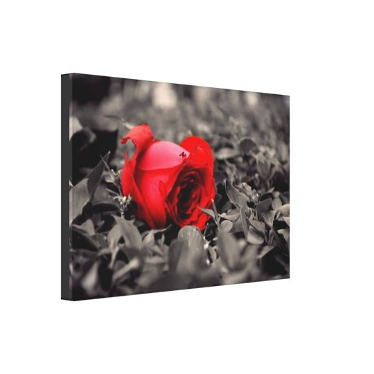 Red Rose Flower Romantic Wrapped Canvas
