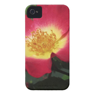 Red rose flower with yellow stamens Case-Mate iPhone 4 case