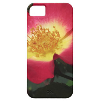 Red rose flower with yellow stamens iPhone 5 cases