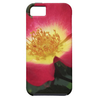 Red rose flower with yellow stamens iPhone 5 covers