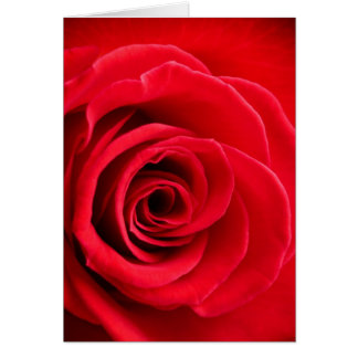 Red rose folded card