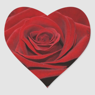 Red rose - Herzförmige sticker
