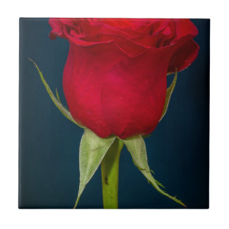 Red Rose Image Ceramic Tile