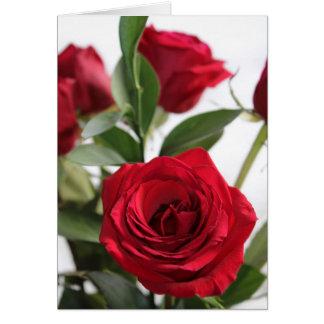 Red Rose in Bloom Card