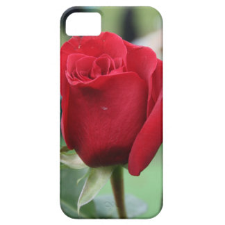 Red rose iPhone 5 cases